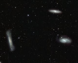 Three Lions in the Cosmic Zoo