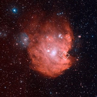 The Monkey Head Nebula